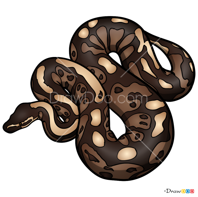 How to Draw Python, Snakes