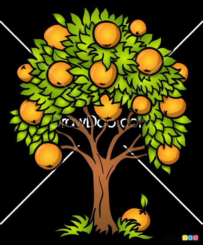 How to Draw Orange Tree, Trees