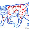 How to Draw Lynx, Wild Animals