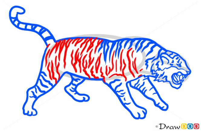 How to Draw Tiger, Wild Animals