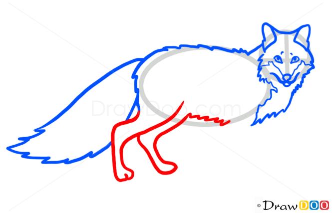 How to Draw Fox, Wild Animals