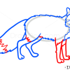 How to Draw Fox, Wild Animals