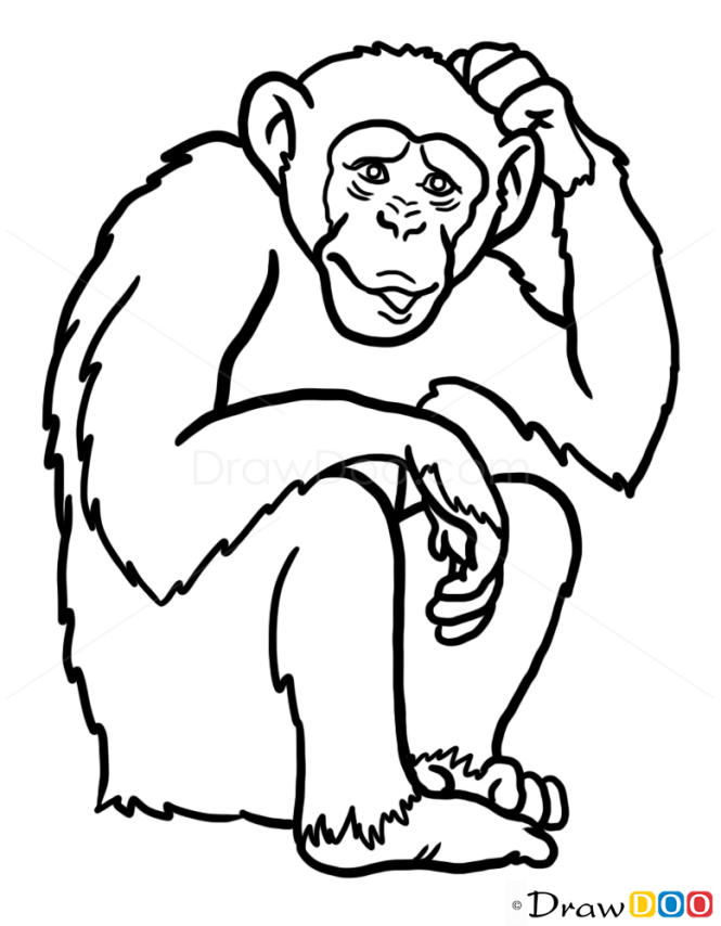 Line Drawing Monkey : How to draw monkey wild animals