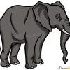 How to Draw Elephant, Wild Animals