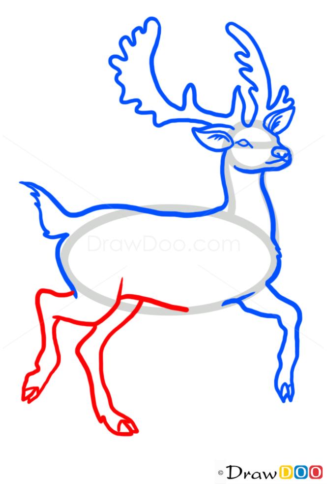 How to Draw Deer, Wild Animals