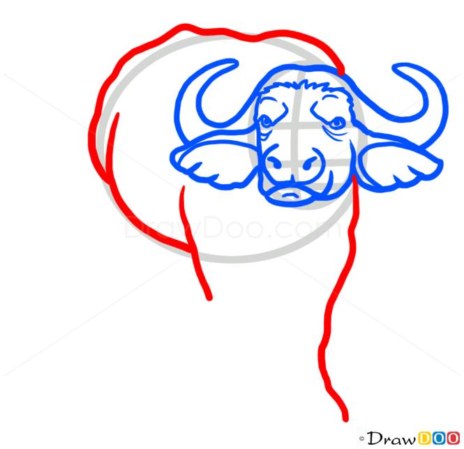 How to Draw Buffalo, Wild Animals