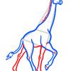 How to Draw Giraffe, Wild Animals
