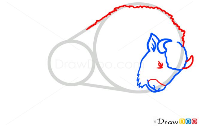 How to Draw Bison, Wild Animals