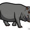 How to Draw Hippopotamus, Wild Animals
