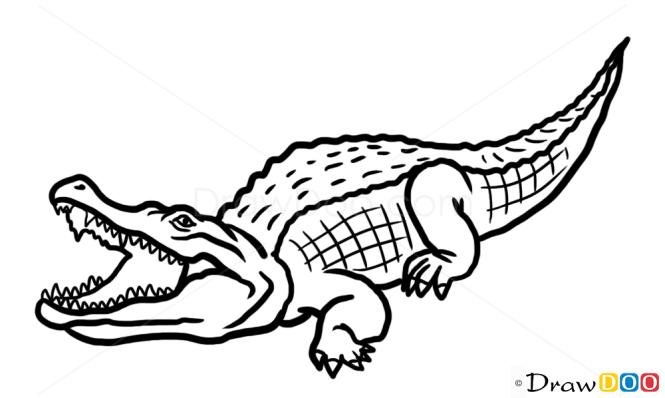 How to draw crocodile wild animals for Easy to draw crocodile