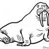 How to Draw Seal, Wild Animals