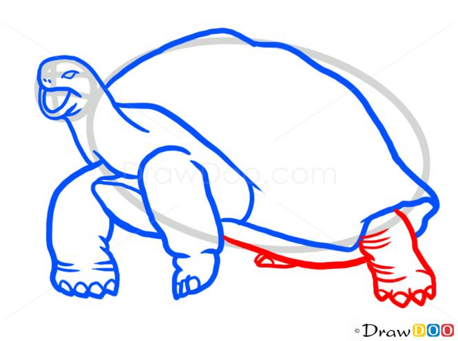 How to Draw Turtle, Wild Animals