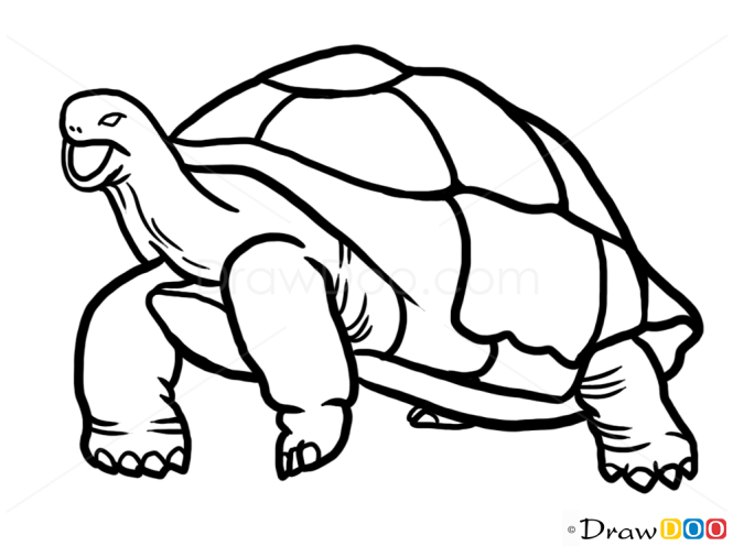 how to draw turtle wild animals