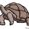 How to Draw Turtle, Wild Animals