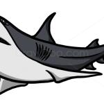 How to Draw Shark, Wild Animals