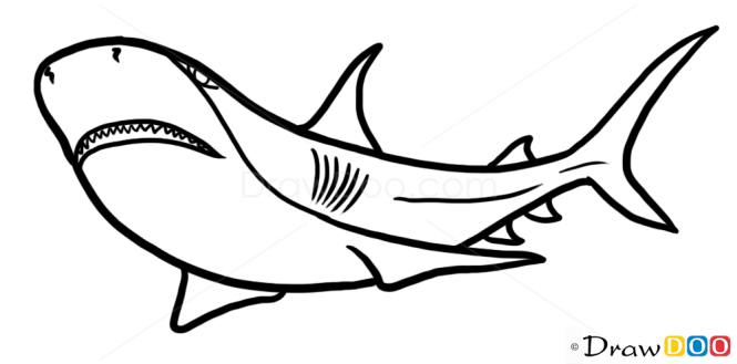 How to Draw Shark, Wild Animals
