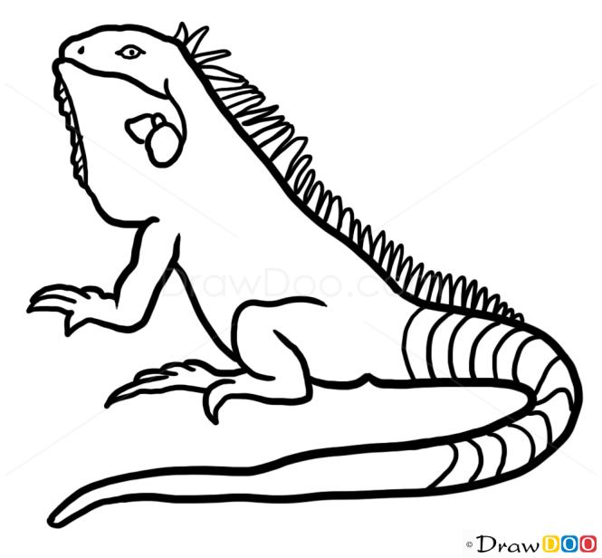 How to Draw Iguana, Wild Animals