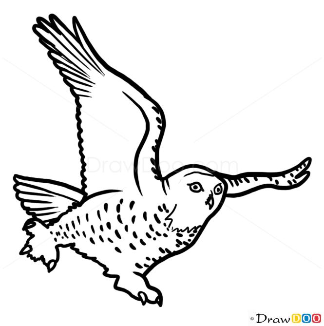How to Draw Owl, Wild Animals