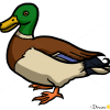 How to Draw Duck, Wild Animals