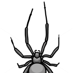 How to Draw Spider, Wild Animals