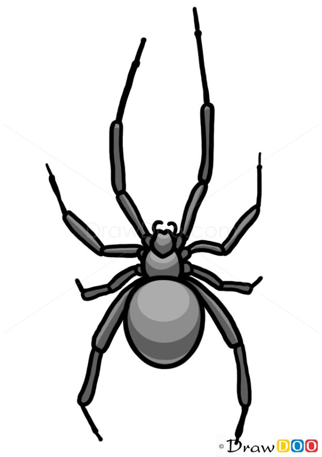 How to Draw Spider, Wild Animals