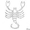 How to Draw Scorpio, Scorpion, Zodiac Signs
