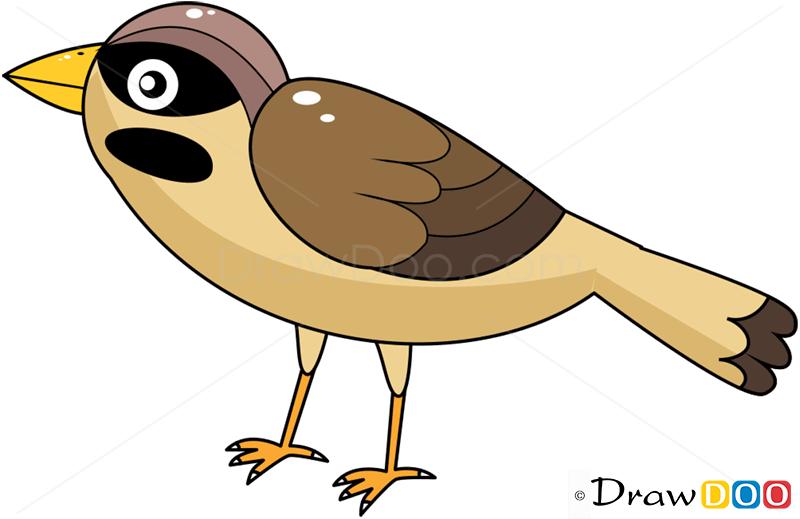 How To Draw Sparrow Birds