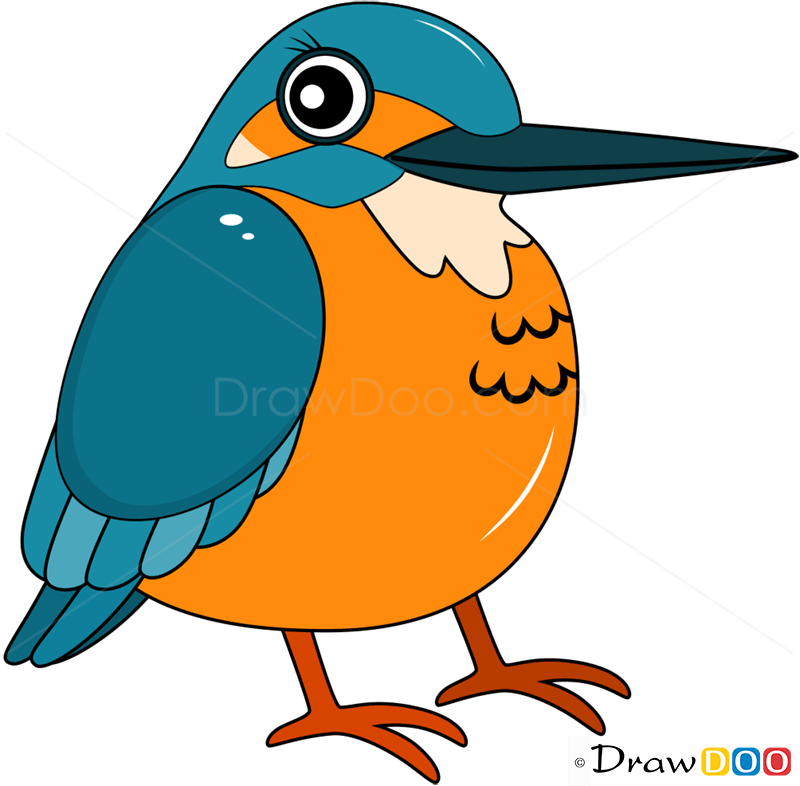 How To Draw Kingfisher Birds