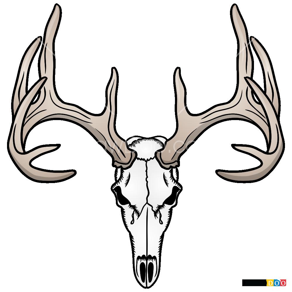 How To Draw Deer Skull Deer