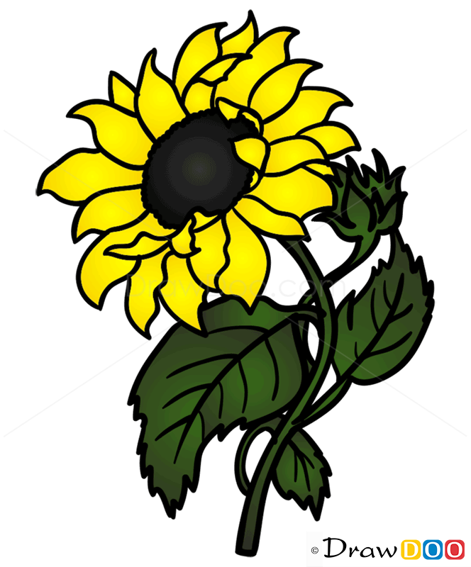 How To Draw Sunflower Flowers