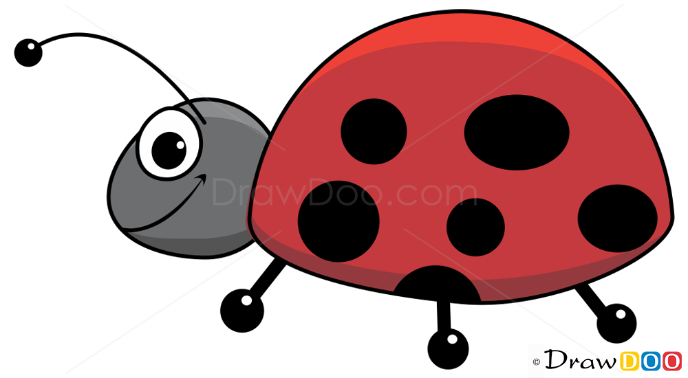 How To Draw Ladybug Insects