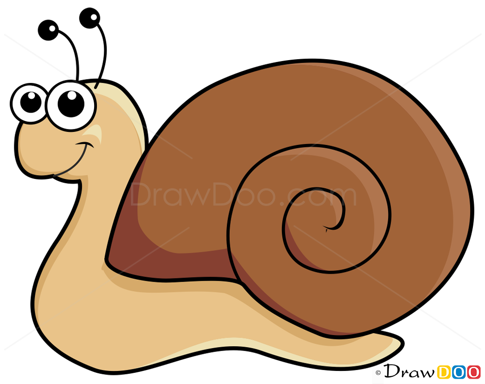 Land snail drawing lesson learn how to draw a snail for How do you draw a snail